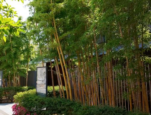木造としては国内最大級の麻布大観音様(十一面観音菩薩)